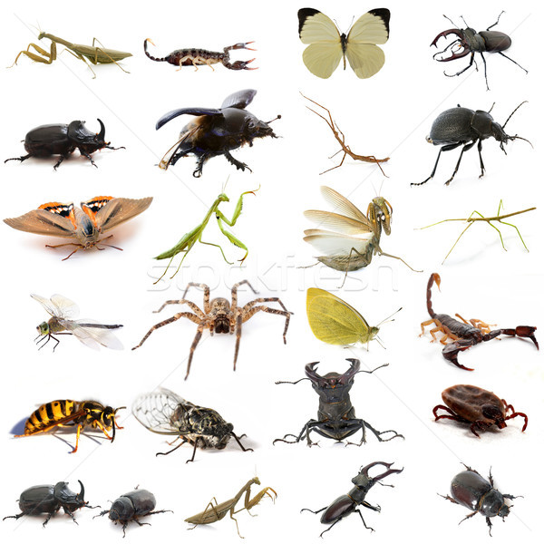 group of european insects Stock photo © cynoclub