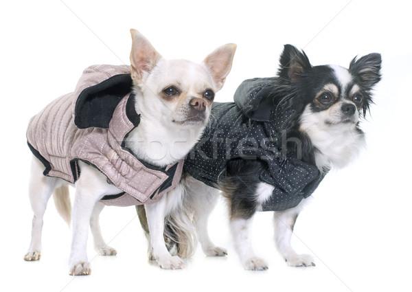 Сток-фото: студию · собака · весело · черный · белый · ПЭТ