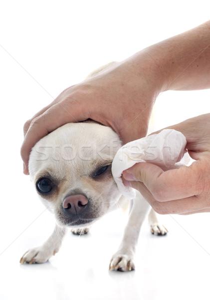 Mosás nő szemek kutya fehér tiszta Stock fotó © cynoclub