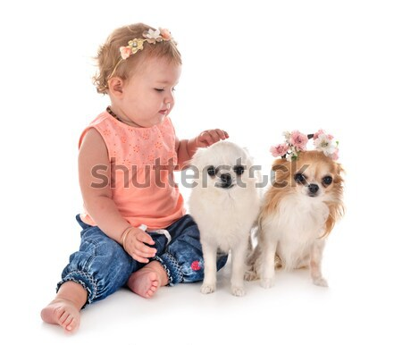 little boy and chihuahua crying Stock photo © cynoclub