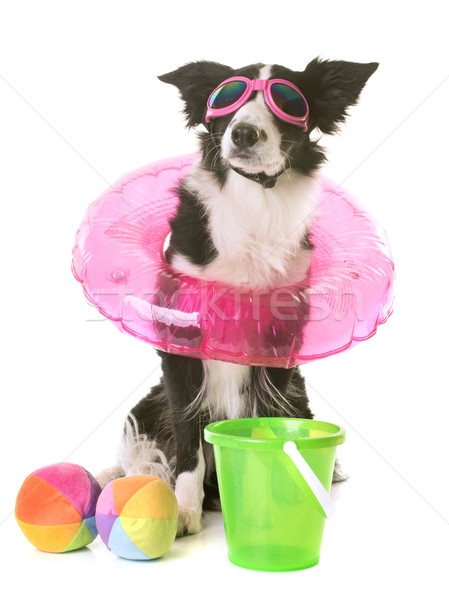 Бордер колли праздников белый морем мяча игрушку Сток-фото © cynoclub