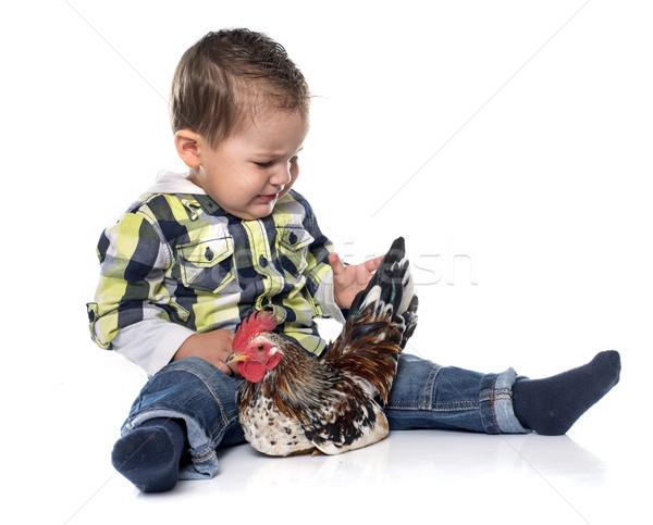 little boy and chicken Stock photo © cynoclub