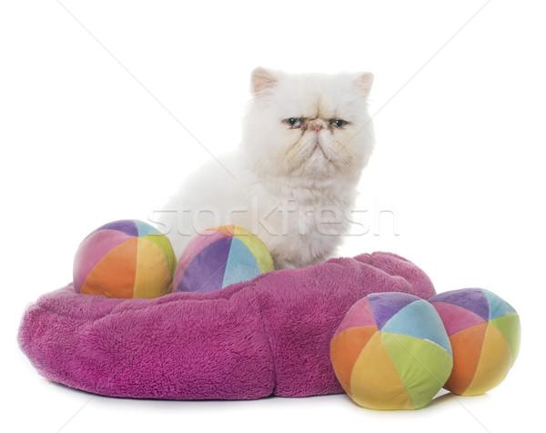 白 ペルシャ猫 目 青 ボール 子猫 ストックフォト © cynoclub