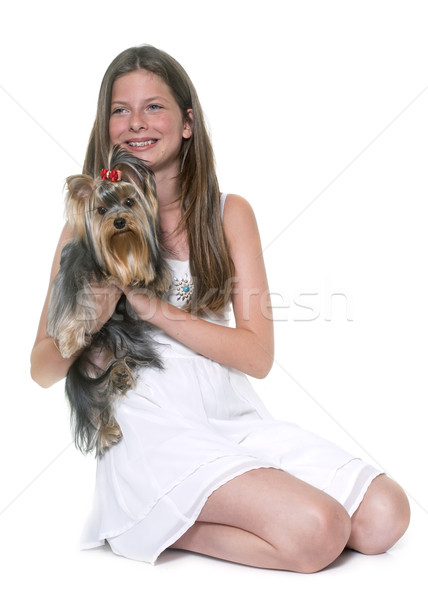 young yorkshire terrier and child Stock photo © cynoclub