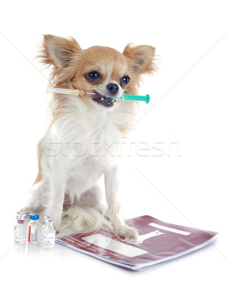 Strzykawki biały psa lekarza pracy szczeniak Zdjęcia stock © cynoclub