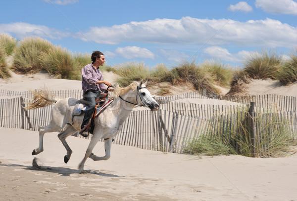 galloping horse Stock photo © cynoclub