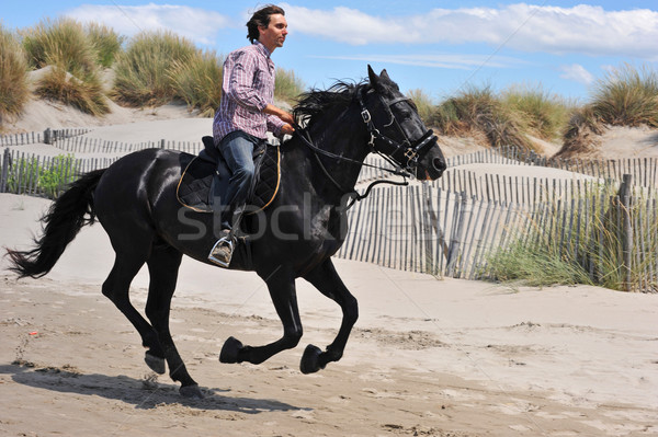 galloping stallion Stock photo © cynoclub