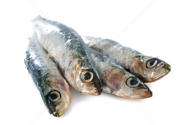 fresh sardine Stock photo © cynoclub