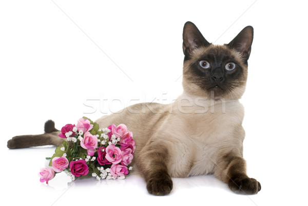 Fiatal sziámi macska fehér virág szemek kiscica Stock fotó © cynoclub