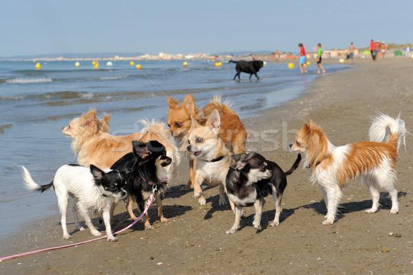 Foto stock: Playa · retrato · cute · agua · perro