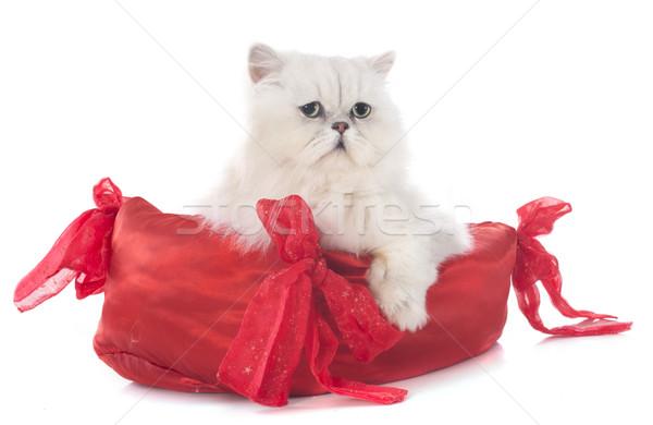 Witte perzische kat kussen kat bed Rood Stockfoto © cynoclub