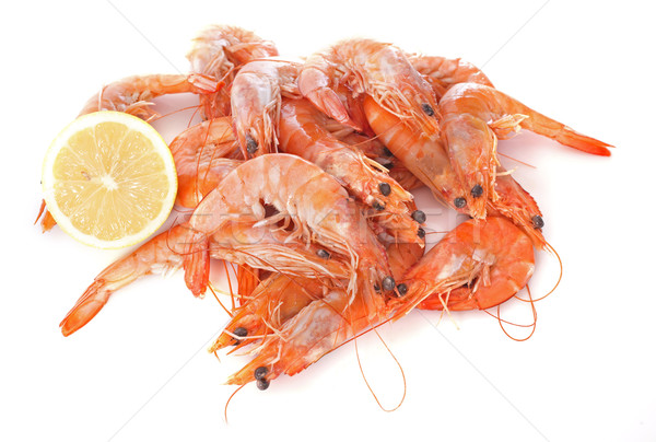 common prawn Stock photo © cynoclub