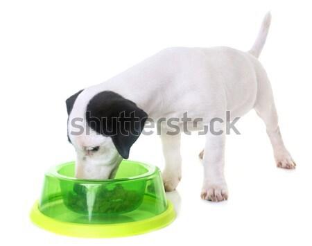 Comer sin pelo gato blanco alimentos Foto stock © cynoclub