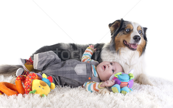 baby and australian shepherd Stock photo © cynoclub