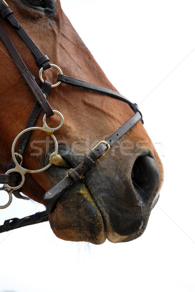 bridle Stock photo © cynoclub