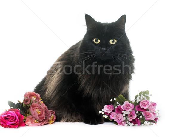 黒猫 花 白 バラ 自然 ストックフォト © cynoclub