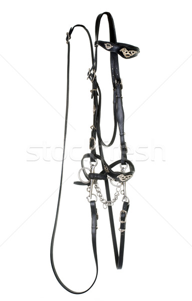 Stock photo: spanish bridle for horse