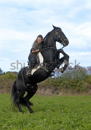 馬 美しい 黒 種馬 男 フィールド ストックフォト © cynoclub