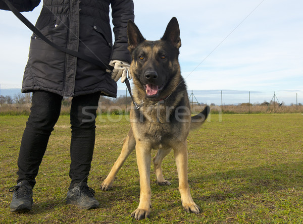 german shepherd and owner Stock photo © cynoclub