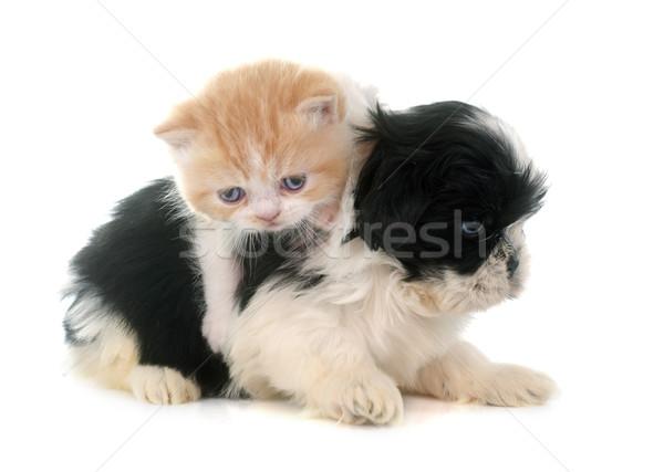 Сток-фото: котенка · щенков · белый · кошки · животного · студию