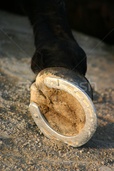 hoof of horse Stock photo © cynoclub