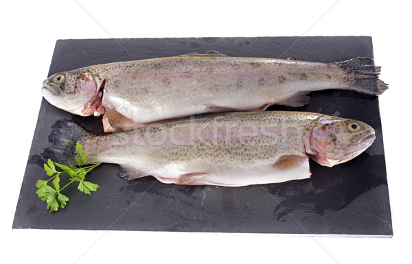 rainbow trout Stock photo © cynoclub