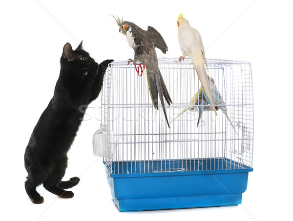 kitten playing with bird Stock photo © cynoclub