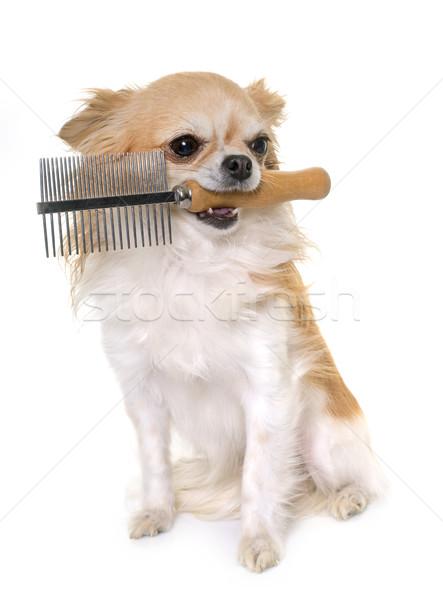 Tarak beyaz köpek temizlemek Stok fotoğraf © cynoclub
