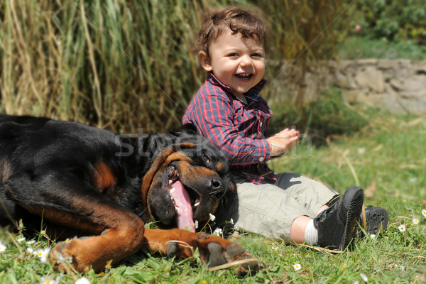 rottweiler and child Stock photo © cynoclub