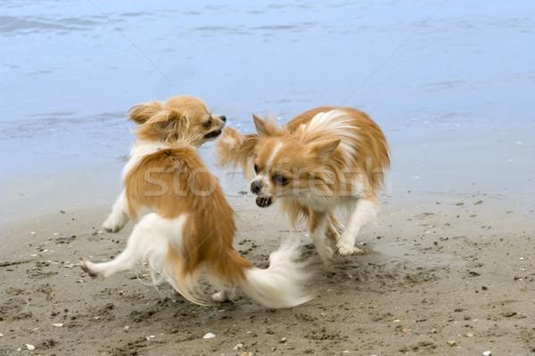 Foto stock: Playa · dos · jugando · agua · perro