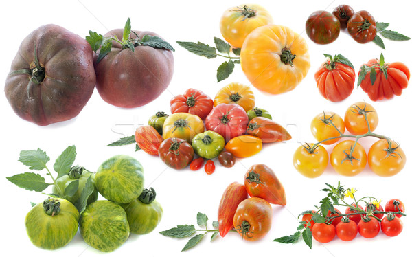 ancient varieties of tomatoes Stock photo © cynoclub