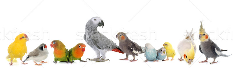 group of birds Stock photo © cynoclub