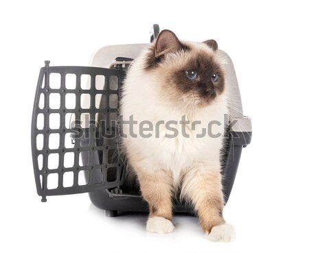 cat in kennel and chihuahua Stock photo © cynoclub