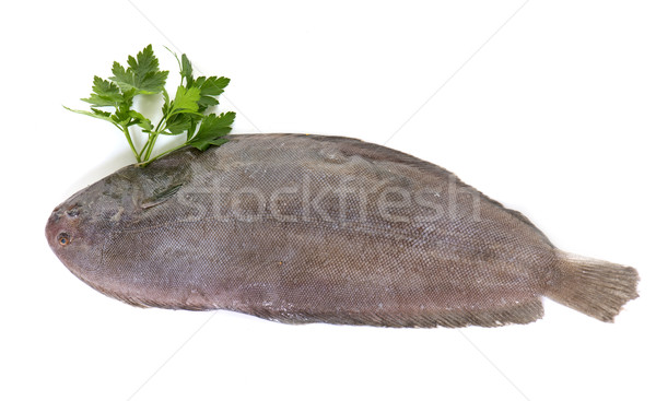 sole fish in studio Stock photo © cynoclub