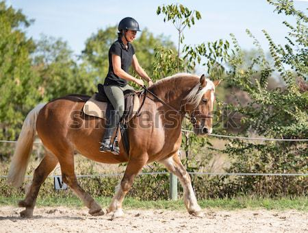 riding woman on stallion Stock photo © cynoclub