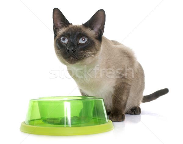 Eszik sziámi macska fehér étel szemek kiscica Stock fotó © cynoclub