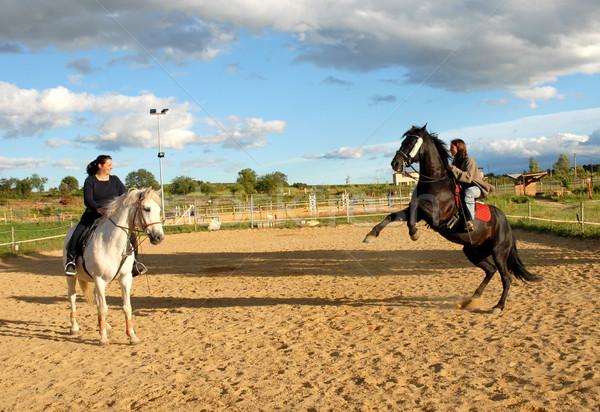 rearing horse Stock photo © cynoclub