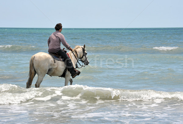 man and horse in sea Stock photo © cynoclub