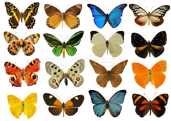 colorfull butterfly Stock photo © cynoclub