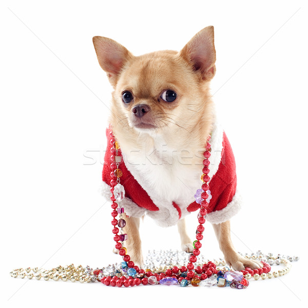 肖像 宝石 クリスマス 白 犬 動物 ストックフォト © cynoclub