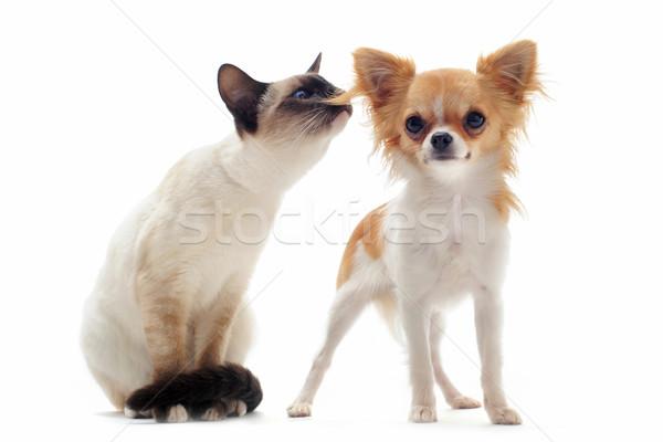 Сток-фото: щенков · котенка · портрет · Cute · белый