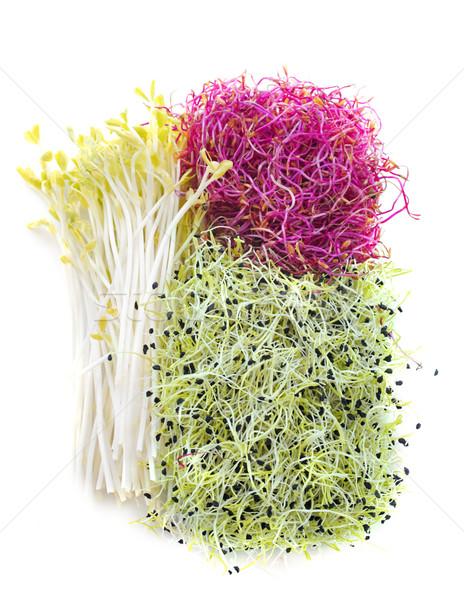 seed germs Stock photo © cynoclub
