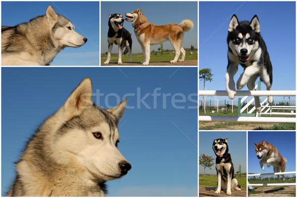 фотография собаки небе собака Сток-фото © cynoclub