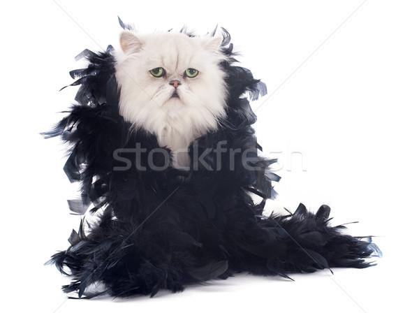 白 ペルシャ猫 羽毛 動物 ペット 白地 ストックフォト © cynoclub