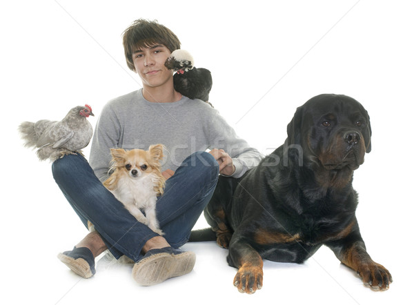teen, dogs and chicken Stock photo © cynoclub