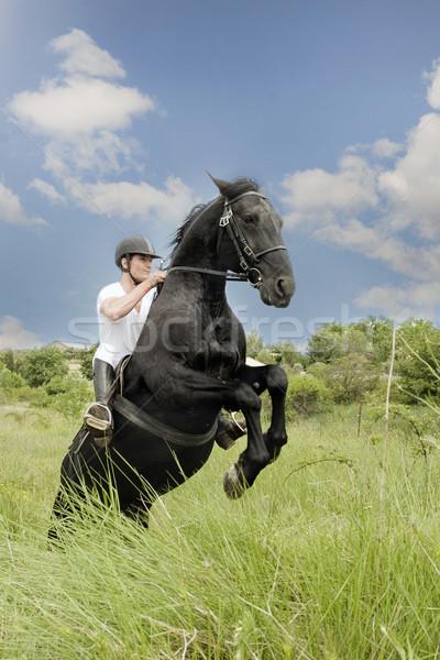 Młody człowiek konia czarny ogier dziedzinie człowiek Zdjęcia stock © cynoclub