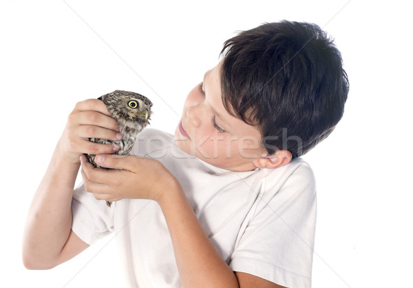 Little owl and child Stock photo © cynoclub