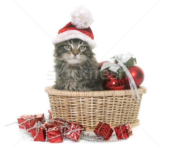 Maine kiscica karácsony fehér macska kalap Stock fotó © cynoclub