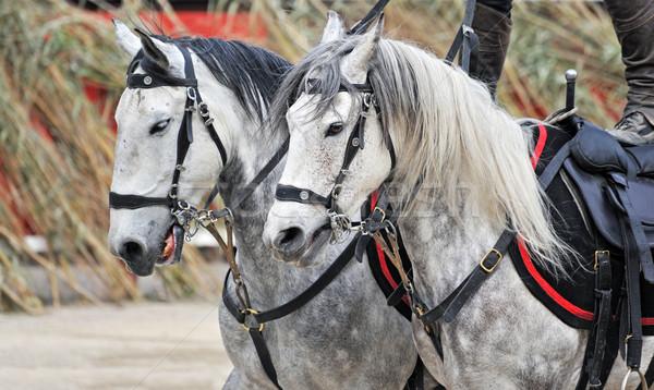 equestrian show Stock photo © cynoclub