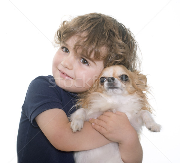 chihuahua and little boy Stock photo © cynoclub